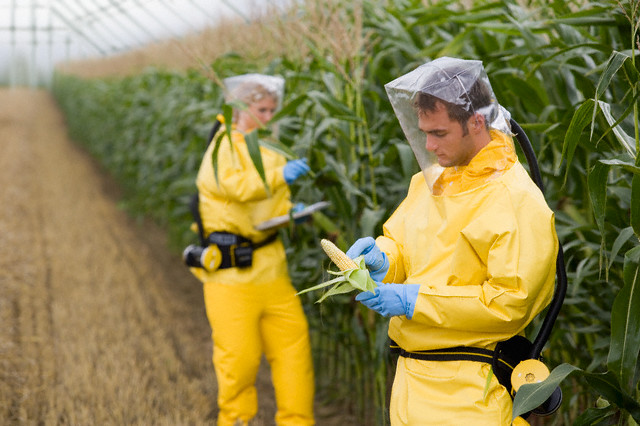 GMO Food Trials